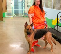 Why addressing animal cruelty crimes matters