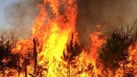 Understanding the firefighter arsonist