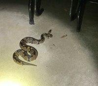 Ohio cop finds 'trespassing' snake, seeks owner