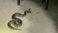 Ohio cop finds 'trespassing' snake, seeks owner