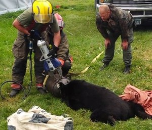 Rescuers responded to a call about a bear stuck in an old 10-gallon milk can. (Photo/Minnesota Dept. of Natural Resources)