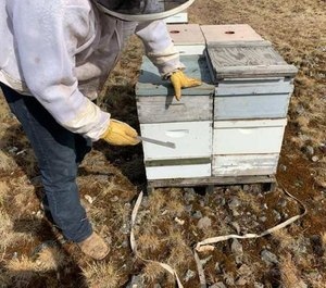 Some of the suspected stolen beehives found by investigators in June 2020. (Photo/Lincoln County Sheriff's Office)