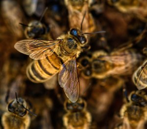 The Laredo Fire Department shared tips for avoiding a bee attack after an elderly couple were stung 100 times by the insects. (Photo/TerriAnneAllen, Pixabay)