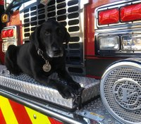 Ind. FD plans 'Salute to Bosco' event for fire dog dying of cancer