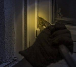 One active burglar can wreak havoc in a community.