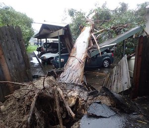 In this image released by the Santa Barbara County Fire Department, a large eucalyptus tree toppled onto carport damaging vehicles in Goleta, Calif., Friday, Feb. 17, 2017.