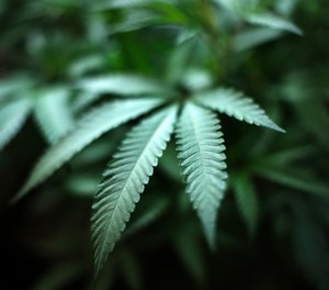 Michigan law enforcement agencies have to adjust to new marijuana laws.