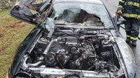 Conn. car fire likely caused by mice in engine bay, officials say