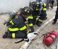 Rescuers perform CPR on cat saved from fire