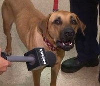 Chicago firehouse dog found after missing for a month