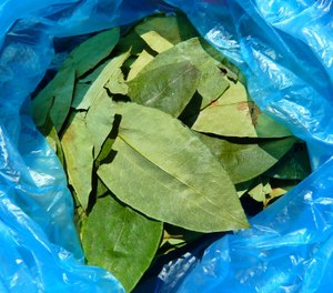 Public records show firefighter Kevin Reynolds told investigators he brought a box of coca tea home after hiking Machu Picchu in Peru. The tea is used in South America to fight off altitude sickness. (Photo/Pixabay)