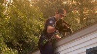 A purr-fect first rescue for SC rookie