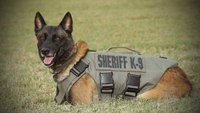 Texas K-9 fatally shot during pursuit, funeral service announced
