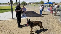 Ariz. cop suspended for 20 hours after K-9 left in hot car dies
