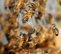 2 firefighters, 3 others hospitalized after freak bee attack