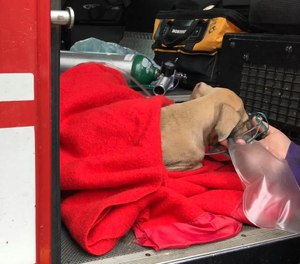 The Danville Fire Department rescued a puppy, who they dubbed