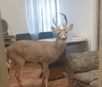 Viral photo: Deer walks into Ky. EMS dept. with injured leg