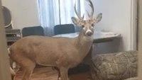 Viral photo: Deer walks into Ky. EMS dept. with injured leg