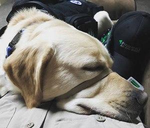Service dog Delmar comforts Paramedic Chris Minich while on-duty. (Photo/John Minich)
