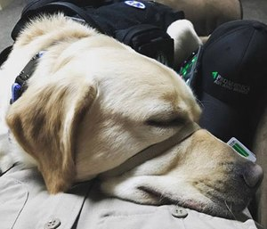 Service dog Delmar comforts Paramedic Chris Minich while on-duty.