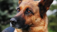 6 ways to protect your K-9s on the job