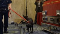 Arson dog program boosts conviction rates