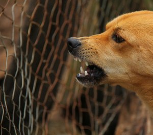 Training in special tactics and techniques for the management of dogs at tactical scenes makes sense. (Photo/Pixabay)