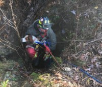 Video: Firefighters rescue dog from 40-foot sinkhole