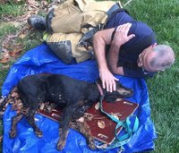 Firefighter comforts just-rescued dying dog