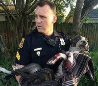 Fla. cops save dog found shot, tied to railroad tracks