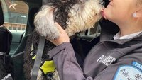 Photo of the Week: Peer and pup support at Allina Health EMS