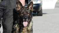 Fla. K-9s hurt in line-of-duty can get ambulance rides under new law