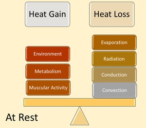 Figure 1. When the body is at rest, thermoregulation is relatively balanced as the body's cooling mechanisms can effectively work.