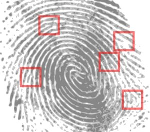 The Integrated Automated Fingerprint Identification System merges local, state and federal fingerprint records.