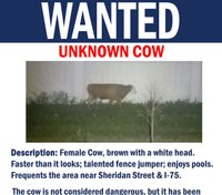 Fla. police searching for 'wanted' cow