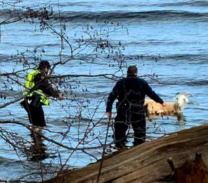 Police officers approach a pet goat that escaped into the near-freezing ocean in Maine.