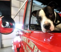 Happy pup is 'comfort companion' for firefighters