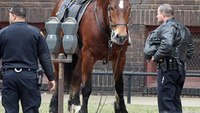 Police horse briefly on the loose in downtown Cleveland