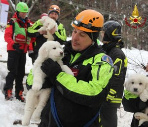 Italian firefighters with rescued puppies.