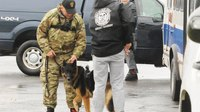 Photos: NY police, K-9s train for explosive detection at first-ever 'Canine Week'