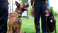 How the Aftermath K-9 grant helps police agencies fund K-9 programs
