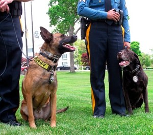 This May 23, 2018, photo shows Luna, a drug-sniffing dog, left, and Hemi, an explosives-sniffing dog, in Galloway N.J., after they won a national competition for police dogs trained to sniff out dangerous or illicit substances.