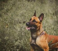 Border Patrol K-9 killed in shootout