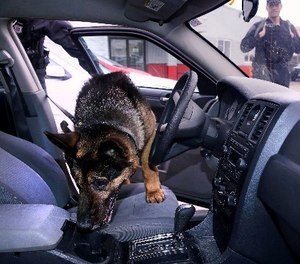 In this Tuesday, May 30, 2017, photo Massachusetts State Police K-9, Maximus, searches a car for drugs with Trooper Brian Bonia, left, during a training session in Revere, Mass.