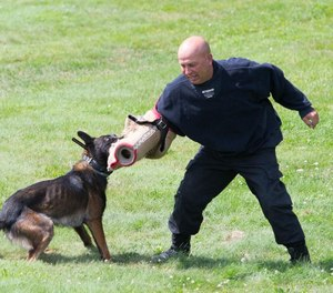 """Worcester police Officer Mark Jolin, playing the part of a suspect, tries to fend off """"Beebs,"""" the Belgian Malinois police dog, at a 2017 press conference at Green Hill Park in Worcester. [T&G File Photo/Matthew Healey]"""