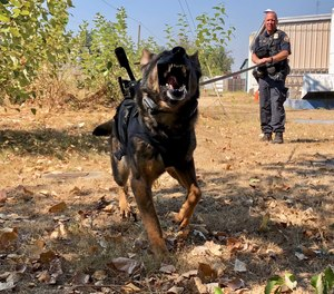 In this Sept. 6, 2018, photo, Portland Police K-9 Officer Shawn Gore gives commands to police dog Jasko, in Portland, Ore.