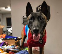NYPD K-9s help collect care packages for 'war dogs' overseas
