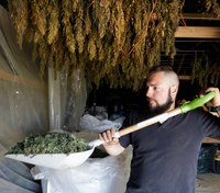 Idaho State Police may get tests to tell hemp and pot apart