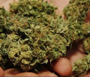 A Connecticut man whose bid to become a firefighter in the state's largest city was rejected because he uses medical marijuana has sued. (Photo/AP)