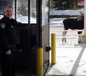 In this Dec. 1, 2016 photo provided by U.S. Customs and Border Protection, a moose stands at the border crossing station between the U.S. and Canada at Norton, Vt., manned by agent Mario Marquis, left. (U.S. Customs and Border Protection via AP)